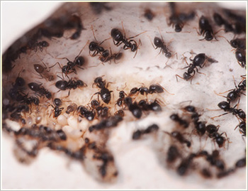Auckland Wide Pest Control